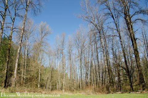 trees-tolt