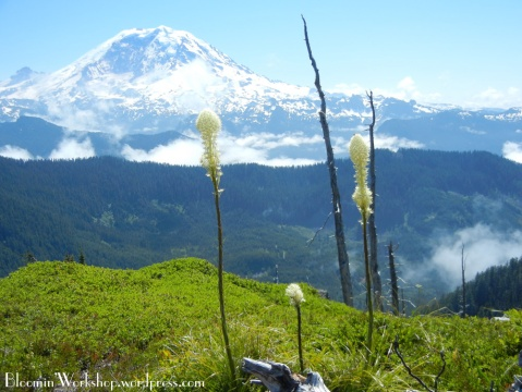 mt-rainier-summit-lake-view