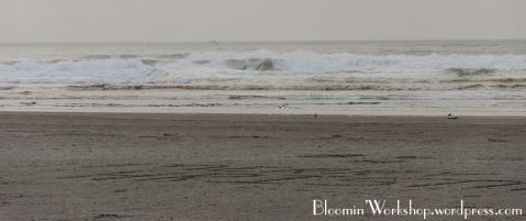 Seaside-beach-2014