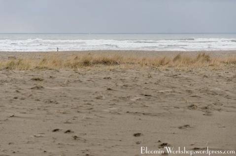 Seaside-beach-grass-2014
