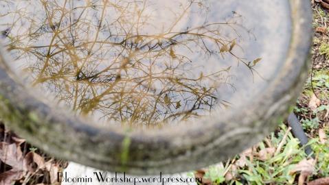 birdbath-reflection